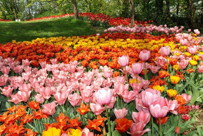 dimore quartetto messer tulipano pralormo