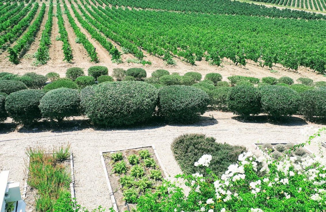 dimore quartetto newsletter aloisa planeta giardino aromatico 0